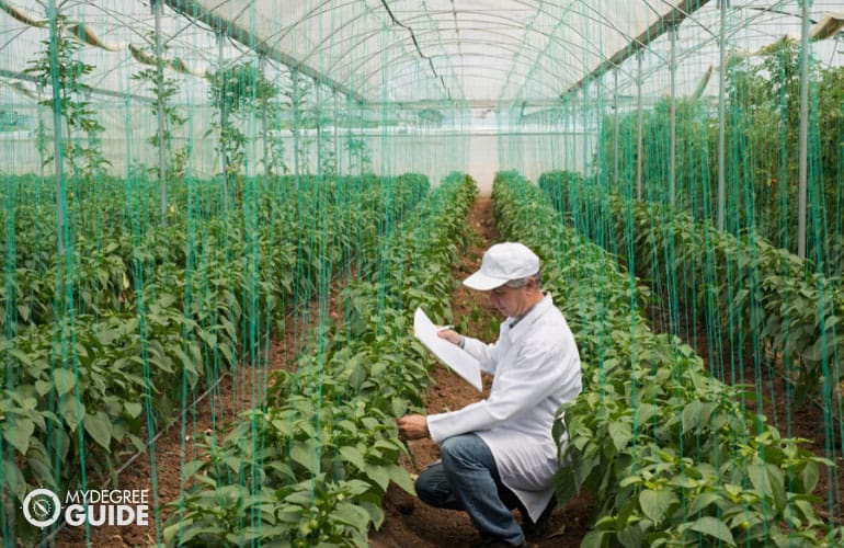 Agricultural Engineer checking quality of plants in a green house
