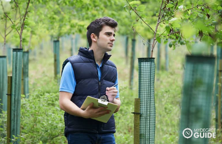 forestry working checking young trees