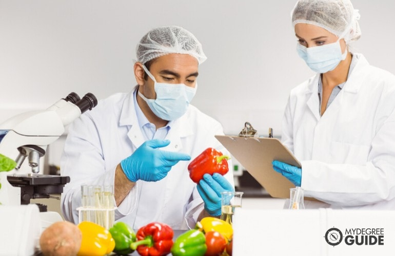 food scientists working in laboratory