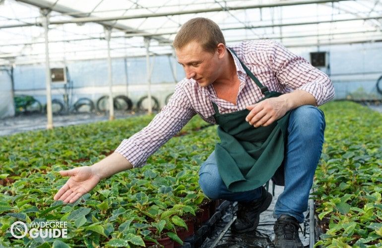 Horticulturist working in his greenhouse