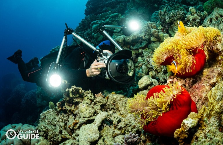 marine biologist taking pictures of marine life