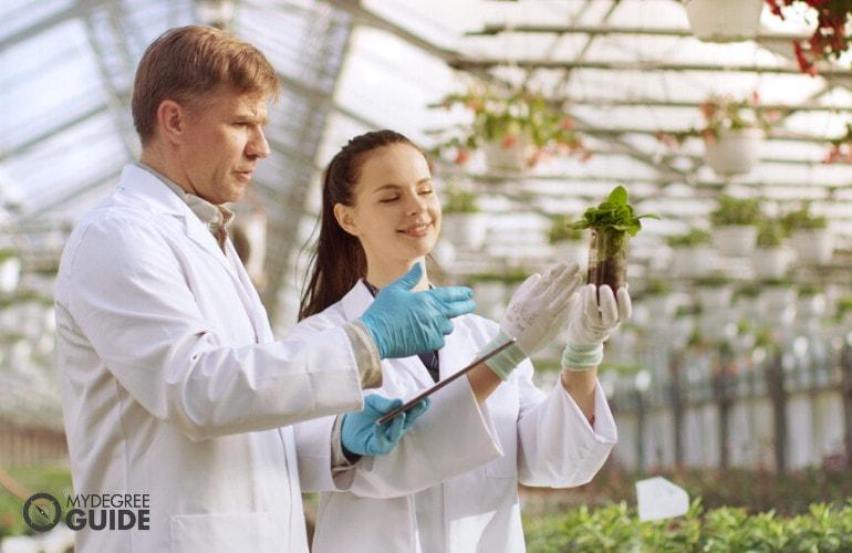 Sustainability Major Curriculum